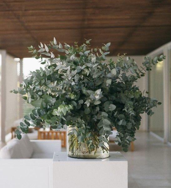 Eucalyptus arragnement
